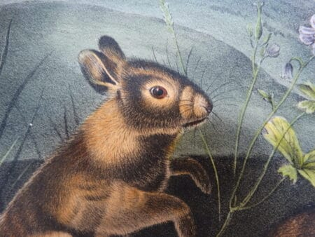 Charming bunny rabbit lithograph sourced from John Audubon Books from the 1850's.