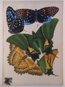 Pochoir butterfly designs by E.A. Seguy published 1926 in Paris, France.