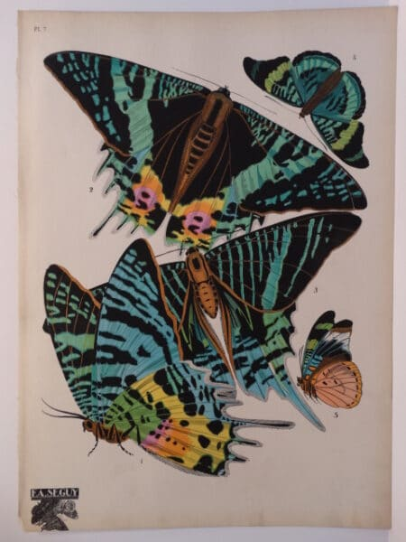 Parisian artwork by E.A. Seguy of butterflies with bright green and blue paint.