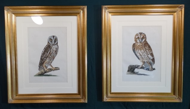 Exceptional folio 18th century engravings of owls by Pennant and Paillou.