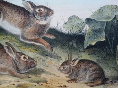 Decorate your home with antique prints of rabbits and reflect your love for them while living with history.