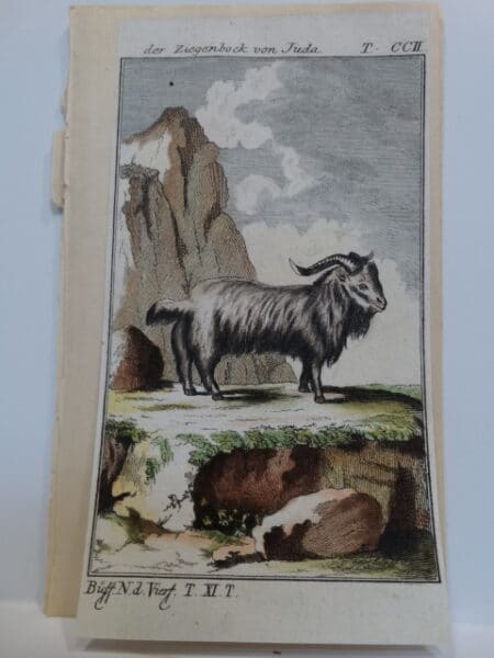 3 1/4 x 6 inch 220 years old watercolor engraving of Jerusalem goat,