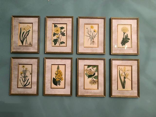 A beautiful collection of 8simples flowers by Curtis, Edwars and Sweet. c.1820 antique engravings with exquisite silk mats. The framed botanicals are hung four over four on teal colored wall.