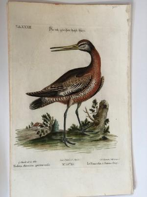 German edition entitled Sammlung Verschiedener Auslandischer un Seltener Vogel.