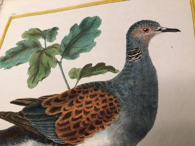 Hand colored engravings sourced from Histoire Naturelle.