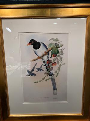 Exquisite framed Gould lithographs, tropical Birds of Asia.