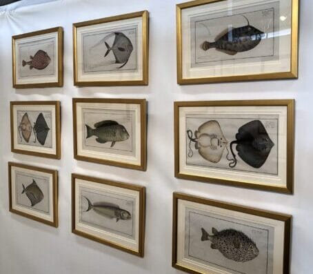 A set of nine framed, fine antique prints, rare engravings of fish, by Eliezer Bloch.