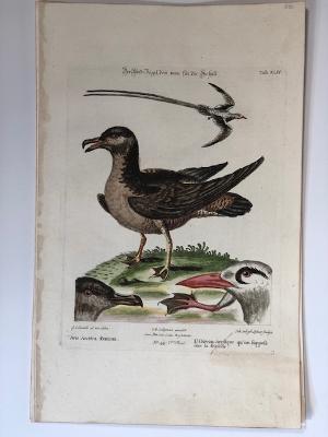 Arctic Bird and Tropic or Tropical bird