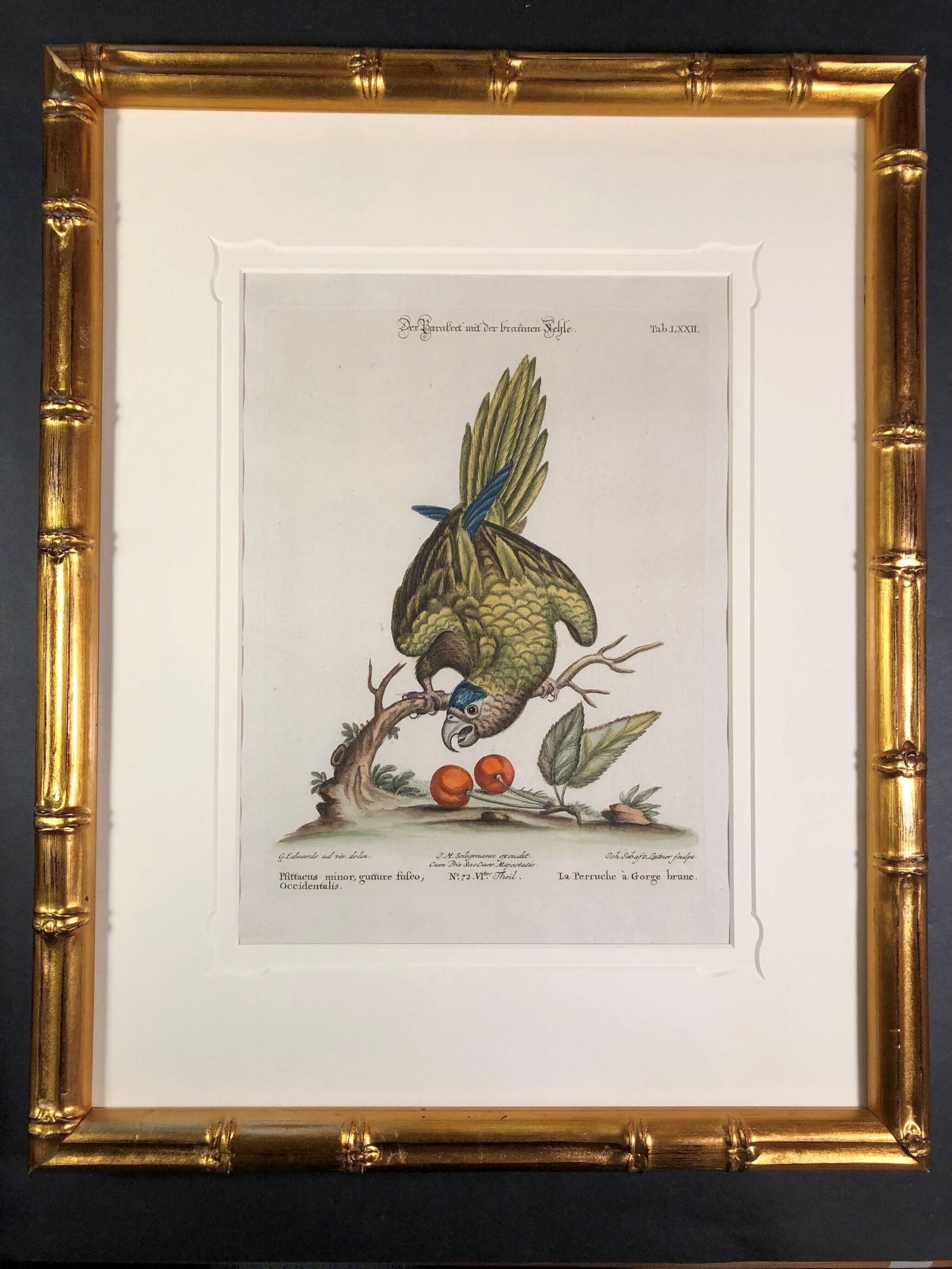 Framed decorative antique prints of Perruches or Psittacus from the 18th century.
