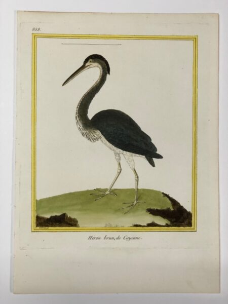 Francois Martinet Histoire Naturelle de Oiseaux 18th century water birds engraving of crested brown or blue heron plate 858 de (of) Cayenne