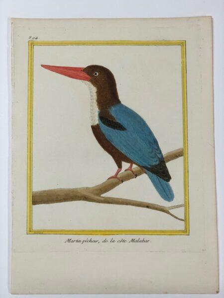 18th century Francois Martinet bird engraving of Martin-pecheur , de la cote Malabar plate 894. Sourced from Histoire Naturelle des Oiseaux, 1770-1783.