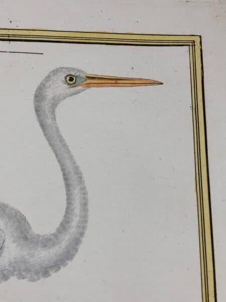 Water birds by Francois Martinet, John Gould, John Selby & Compte de Buffon