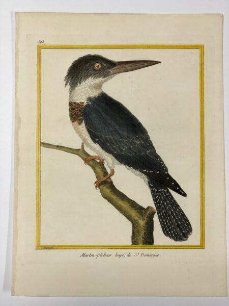 Plate 593 from Histoire Naturelle des Oiseaux, Martin-pecheur hupe, de St. Dominique.