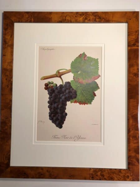 Purple grapes, one of 3 pieces, decorative set three framed antique wine lithographs