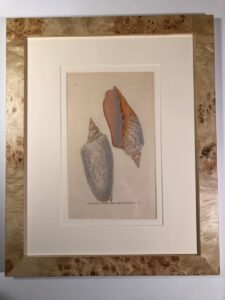 Set of six framed, 200 year old, hand colored engravings of sea shells, by Donovan.