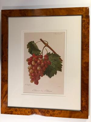 framed French, antique wine lithograph, red grapes, in classic, burlwood frame.