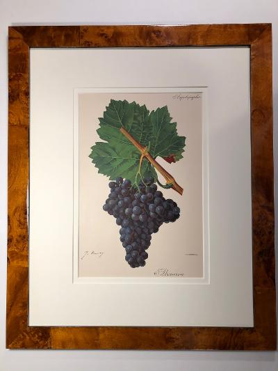 Example of the framed sets of antique prints, suitable for a California vineyard.