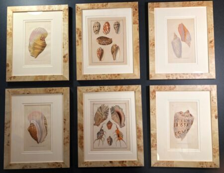 Set of six framed decorative antique prints of sea shells over 175 years old. Perfect decor for ocean & beach house.