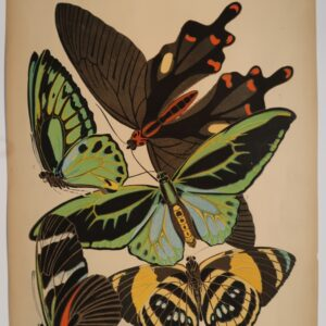 Available and ready to ship, original pochoir plate 1, Eugene Seguy's Papillons.