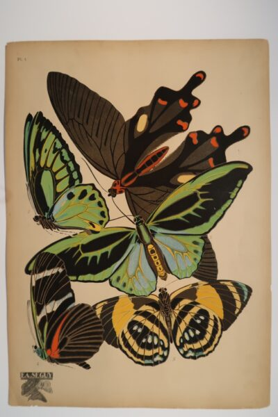 Seguy's butterflies included in pl.1 are: 1. Papilo philoxenus of India, 2. Troides priamus-poseidon of new Guinea, 3. Id dessous from ?, 4. Heliconius antiochus of the Amazon, 5. Catagramma mionina of Columbia.