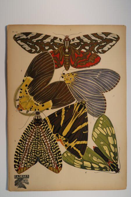 Eugene, Emile-Allain Seguy Papillons, Plate 14.
