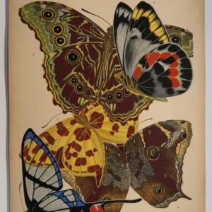 Spectacular, decorative antique print, from a 1920's portfolio of E.A. Seguy Papillons.