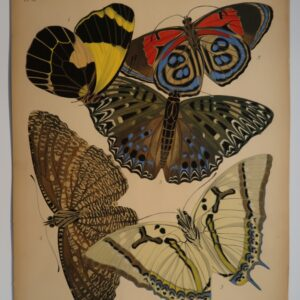 Live with spectacular art, that reflects your interest in design and nature. Own an original pochoir. Plate 12, is sourced from E.A.Seguy's Papillons, 1925.