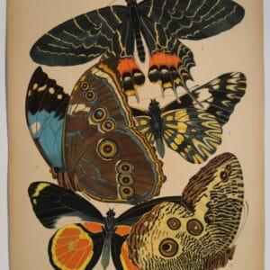 E.A. Seguy Butterflies design. Original 1925 pochoir plate 2.