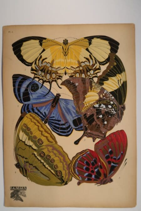 E.A.Seguy's butterfly plates, are decorative pochoir plates, and represent Parisian Art-Deco, in it's height during the 1920's.