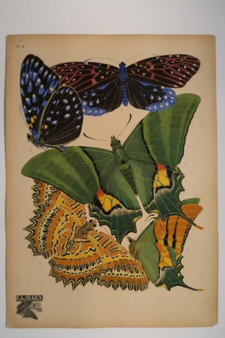 Find and buy, Eugene Seguy's, designer pochoir plates, from Paris in the 1920's including, this plate 6, from his Papillons or Butterflies.