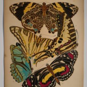 Own art, inspiring designers for years. An original pochoir. Seguy Papillons Plate5, is one of a set of 20. Art-Deco designs of butterflies.