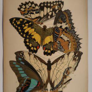 Seguy Papillons Plate 9 species of butterflies are: 1. Papilio deoleus, 2. -dessus, 3. Cethosia cyane, 4. Papilio sarpedon, 5. Cyrestis thyodamas. An original, 1920's, pochoir plate.