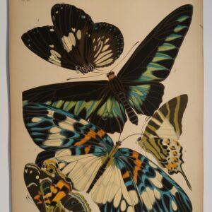 Species of Butterflies in Seguy Papillons Plate 10: 1. Euploea rhadamanthus, 2. Troides brookeana, 3. Erasmia pulchella, 4. Papilio antiphates, 5. Pyrameis myrinna