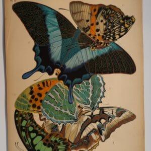 Seguy Butterflies Plate 13