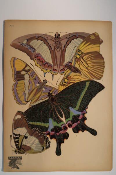 Plate 8 butterflies include: Eriboea athamas, 2. Adelpha melanippe, 3. Adelpha bredowi, 4. Papilio krishna, 5. Hypolimnas misippus.