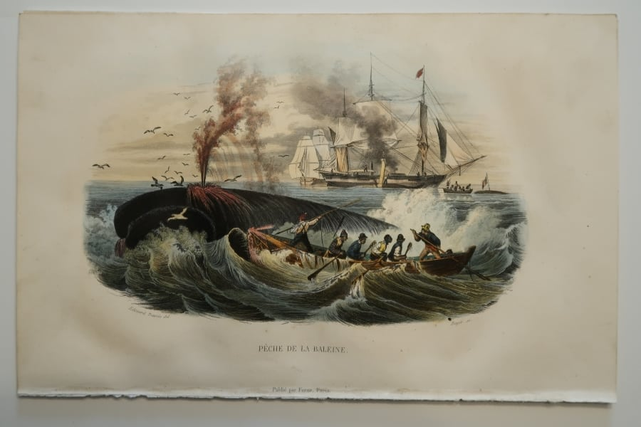 """Whaling ships and whaleboats, Peche de la Baleine, a mid 19th century, antique lithograph. Whaling scene features distressed Baleen whale, being attacked by 6 men in whaleboat. Whaling ships in distance. 6 1/2 x 10"""""""