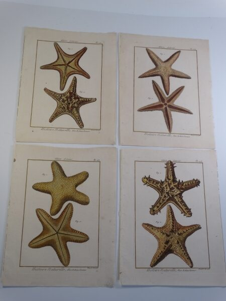 A set of four starfish engravings, approximately 200 years old. Example of the high quality of, ocean related sets of original & decorative antique prints we offer.