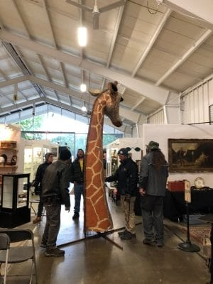 Antiques shows can be very fun, interesting and places to learn and buy vintage and antiques. Here several men are trying to figure out the best way to move a vintage paper mache giraffe's head that is life-sized.