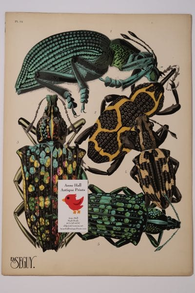An antique pochoir plate depiction of bettles from the 1920's. Art Deco Pochoirs Insectes-14 is an original Eugene Seguy.