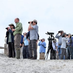 Find us at the best birding events in America, where we all can learn more about birds.