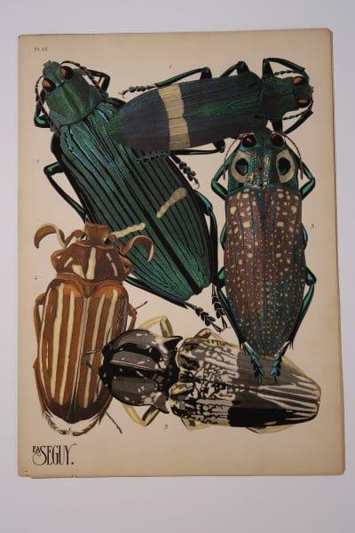Exquisite metallic paints were stenciled onto this antique pochoir artwork, 1925-1926 Paris: EA-Seguy Beetles Plate-13.