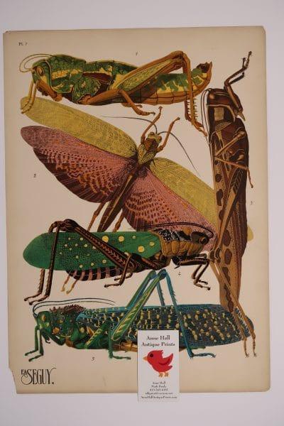 EA-Seguy Grasshoppers Insectes Plate-7, is an original 1920's, Art Deco pochoir for sale.