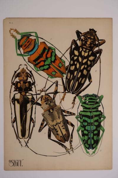 5 different kind of beetles are in this original pochoir art, EA-Seguy Insectes Plate-4. Available & for sale.