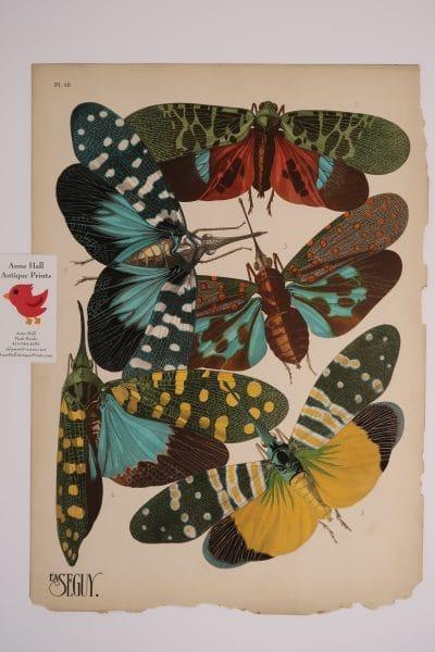 EA-Seguy Insectes Pochoir Plate-16, has exceptional composition of 5 lantern flies, in original pochoirs.