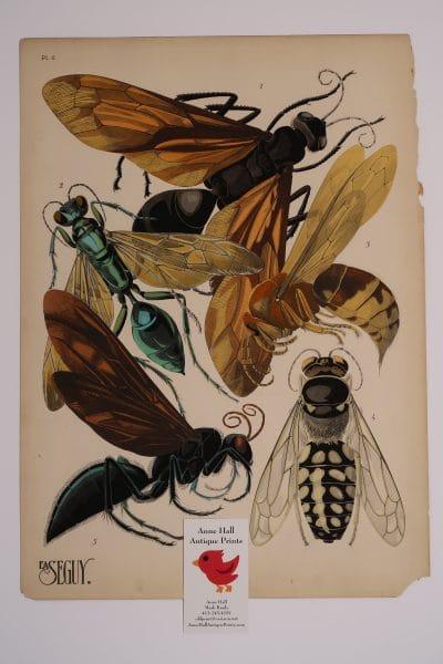 Original French Art Deco Pochoirs EA-Seguy Insectes Plate6