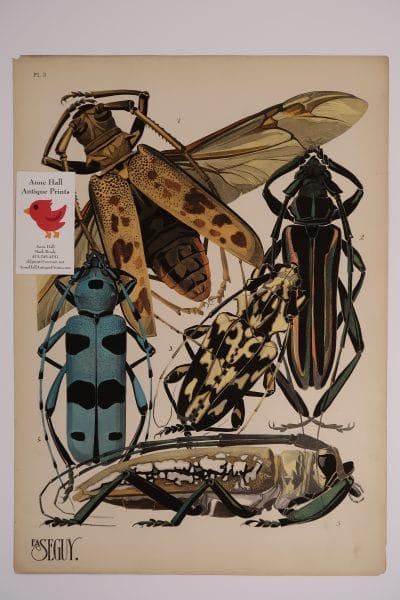 Seguy Insectes Beetles Plate-3, French pochoir, original art, 1920's Paris.