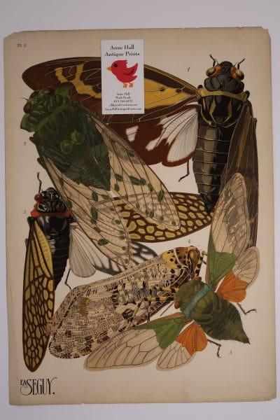 Seguy Insectes Cicadea Plate-2, an original French pochoir art, of cicadas, from 1925 - 1926.