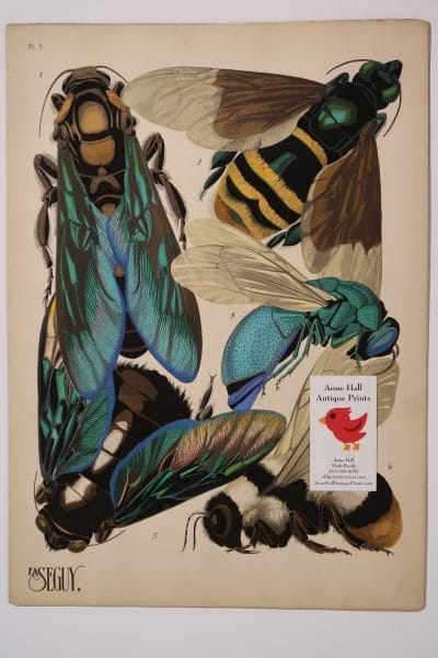Seguy Insectes Papillons Bees-5, plate 5 showing several kinds of bees in this rare, colorful, antique print.