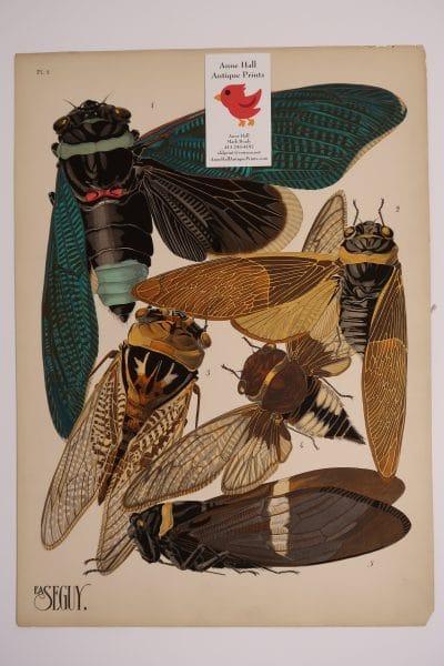 Original French Art Deco pochoir plate, E.A. Seguy Insectes Papillons Cicadas-1