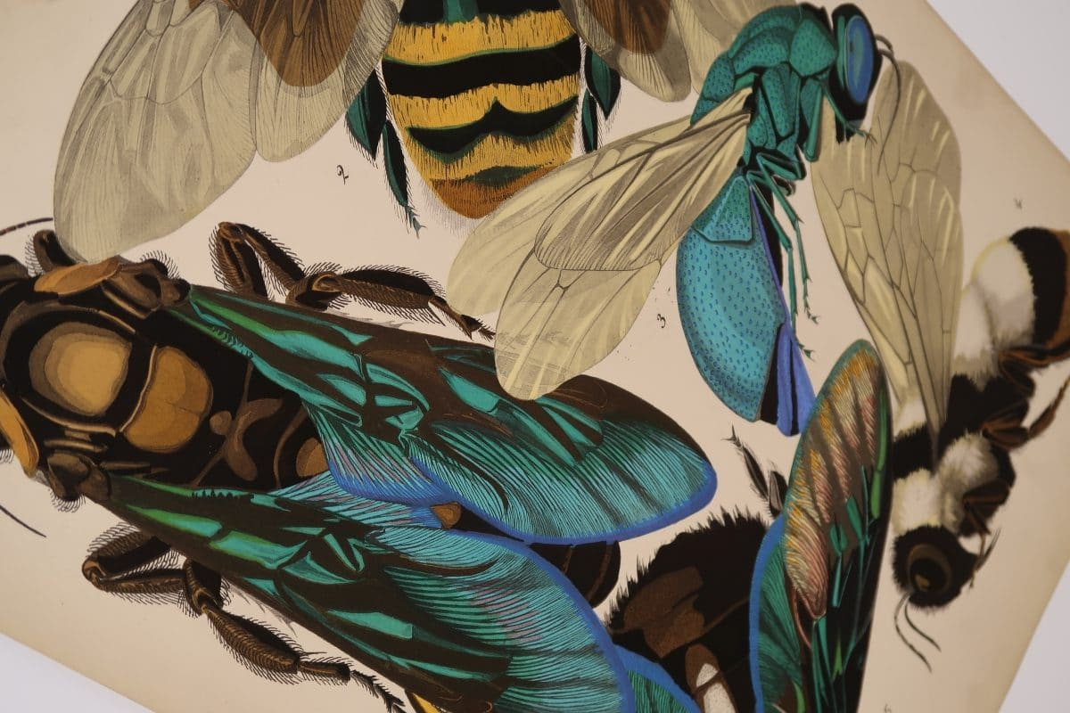 Add to your interior design with Eugene Seguy Insectes Papillons like this electric blue and neon green bugs.